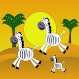 Three amusing zebra  hurry on the desert Royalty Free Stock Photography