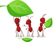 Three Ants working and carrying leafs to the anthill. Three Cartoon Ants working organized in order to carry three leafs to the ant nest  illustration Stock Image