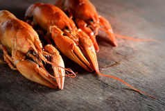 Three appetizing boiled lobster on a dark wooden background Royalty Free Stock Image