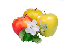Three apple with flower Royalty Free Stock Image