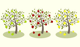 Three apple tree. With yellow, green and red apples Stock Photo