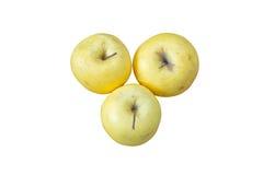 Three apples Stock Image