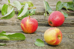 Three apples in drops of water Royalty Free Stock Photo