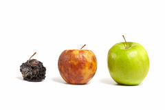 Three apples: fresh, rotting and dead. A large juicy green apple next to a small yellow rotting apple next to the little dead withered apple Royalty Free Stock Photo