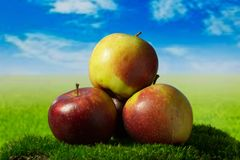 Three apples on the green meadow. Three fruits on the green grass Stock Photography