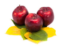 Three apples on leaves isolated Stock Photos