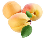 Three apricot with leaves. stock photo