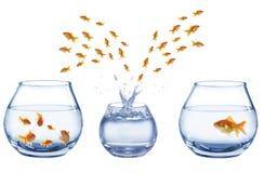 Three aquaria's and of jumping out fish Stock Photo