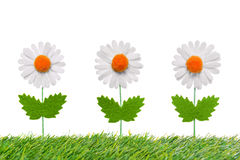 Three artificial daisies on white background. Royalty Free Stock Image
