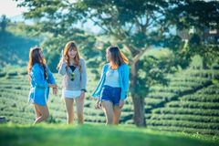 Three asia woman walking on green grass at tea garden. Three asia women walking on green grass at chuifong tea garden in Chiangrai Thailand stock photography