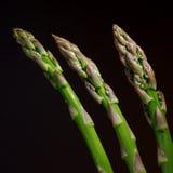 Three Asparagi Stock Photography