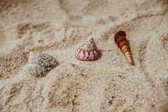 Three Assorted Sea Shells on Brown Sand royalty free stock photos