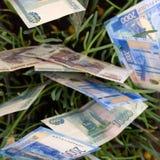 Three Australian dollars planted in garden bed . stock photos