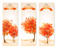 Three autumn abstract banners with colorful leaves and trees. Stock Photo
