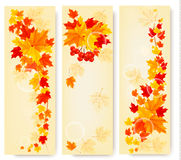 Three autumn backgrounds with colorful leaves. Bac Royalty Free Stock Photos