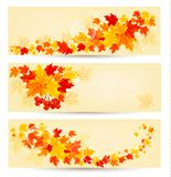 Three autumn backgrounds with colorful leaves. Stock Photos
