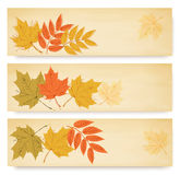Three autumn banners with color leaves Royalty Free Stock Image