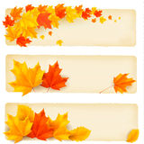 Three autumn banners with colorful leaves Royalty Free Stock Photography