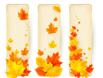Three autumn banners with colorful leaves Stock Photography