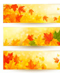 Three autumn banners with colorful leaves in golde Royalty Free Stock Photos