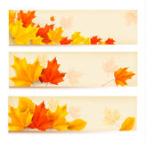 Three autumn banners with colorful leaves Royalty Free Stock Photos
