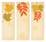 Three autumn banners with colorful leaves Stock Image