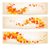 Three autumn banners with colorful leaves. Vector Stock Photos