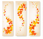 Three autumn banners with colorful leaves Royalty Free Stock Image