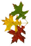 Three autumn leaves stock photography
