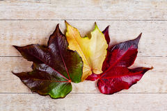 Three autumn leaves Stock Photo