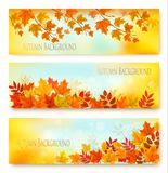 Three Autumn Nature Banners With Colorful Leaves. stock illustration