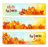 Three Autumn Sale Banners With Colorful Leaves. Layered Vector Royalty Free Stock Photos