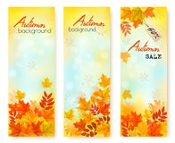 Three Autumn Sale Banners With Colorful Leaves vector illustration