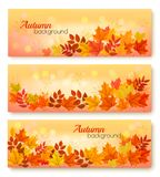 Three Autumn Sale Banners With Colorful Leaves. vector illustration
