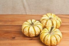 Three Thanksgiving hand picked pumpkin stock photos