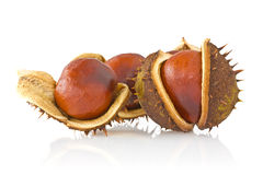 Three autumnal chestnuts Stock Images