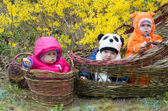 Three baby in the basket Stock Photography