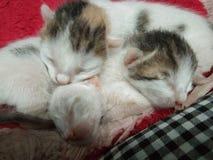 Three lovely baby cats sleeping royalty free stock photography