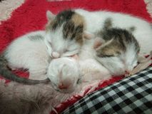 Three Baby Cats Sleeping Picture stock photos