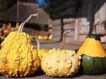 Three Baby pumpkins Royalty Free Stock Photos