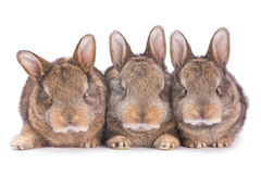 Three baby rabbit on white Stock Photo