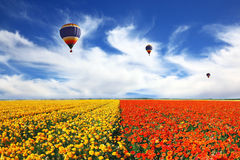 Three balloons flying over the field Stock Photo