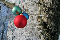 Three Balls on branch of the tree Royalty Free Stock Images