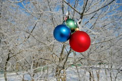 Three Balls on branch of the tree Stock Photos