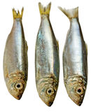 Three Baltic herrings. Royalty Free Stock Photo