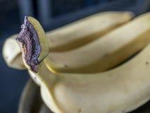 Three bananas in close up Royalty Free Stock Photos