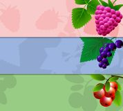 Three banner with raspberries, currants and cranberries with space for your advertising. Illustration Stock Photo