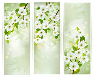 Three banners with blossoming tree branches. Stock Image