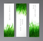 Three banners with fresh green grass on white background. Vector illustration Royalty Free Stock Images