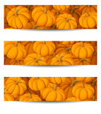Three  banners with orange pumpkins. Royalty Free Stock Images